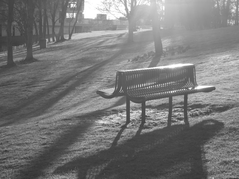 black and white photo of a bench in woodland in soft sunlight