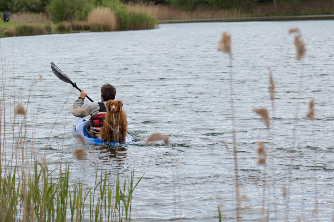A dog on a kayak | carlawatkins.com