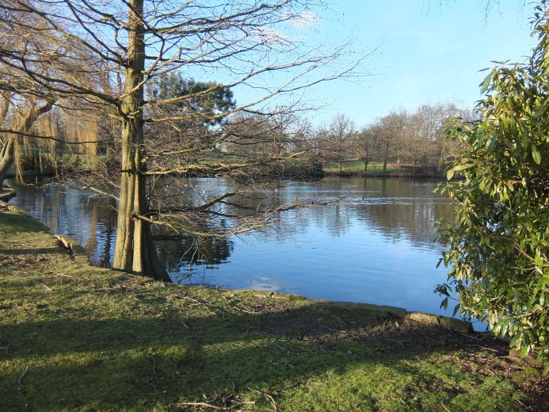 lake and woodland in colour