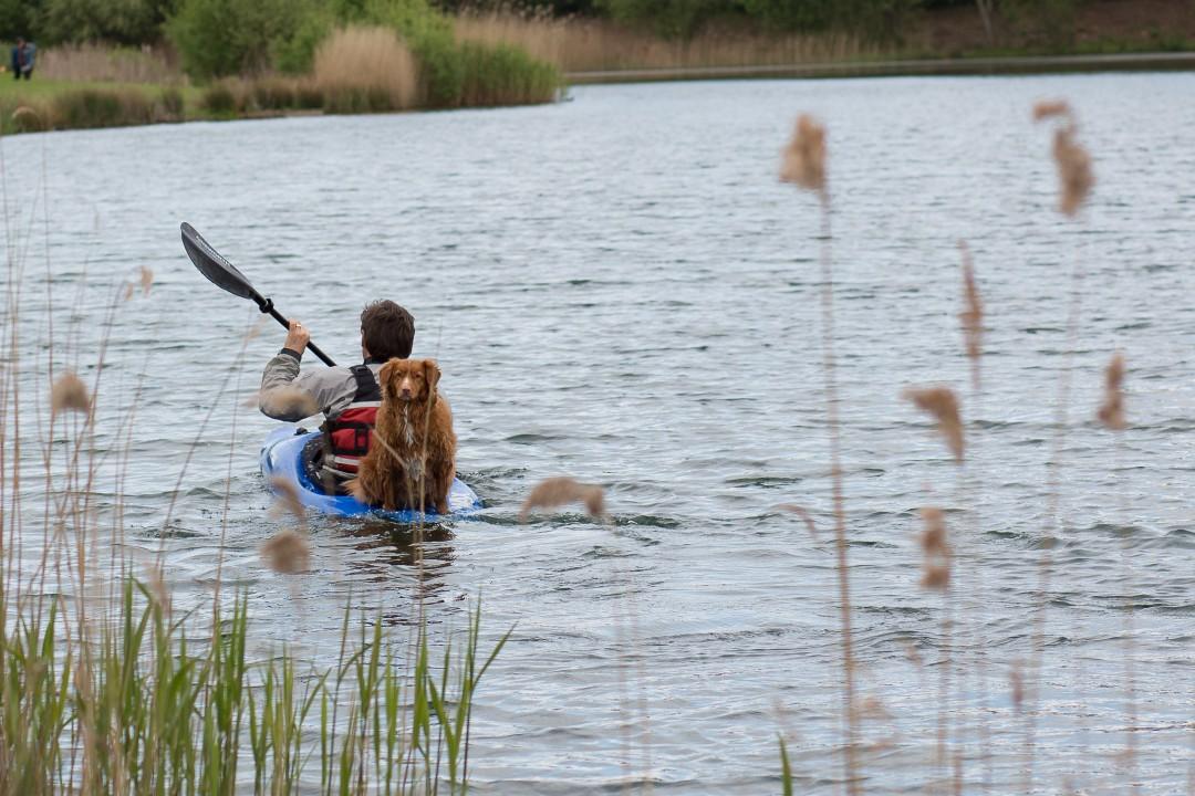 A dog on a kayak   carlawatkins.com